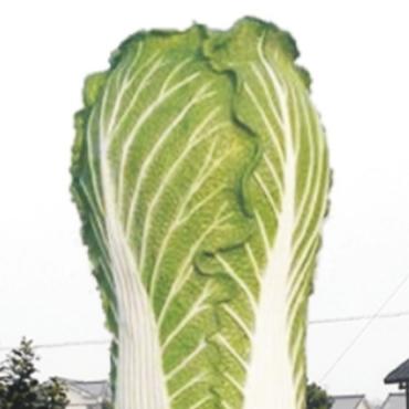 蔬香果坝蔬菜雕塑