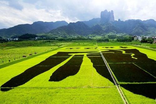 """关于 """"2018年中国农业品牌建设学府奖""""评选活动的通知"""
